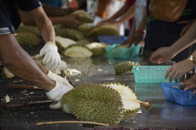 Thai people greengrocer peeling durian fruit for travelers people. Eat in fruits buffet festival at shop on May 29, 2018 in Rayong, Thailand stock image