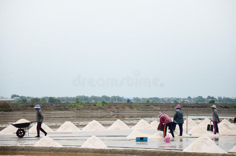 Thai people keeping salt from Salt farming. Or Salt evaporation pond to warehouse at Bangkhunthein on April 12, 2015 in Bangkok Thailand royalty free stock photos