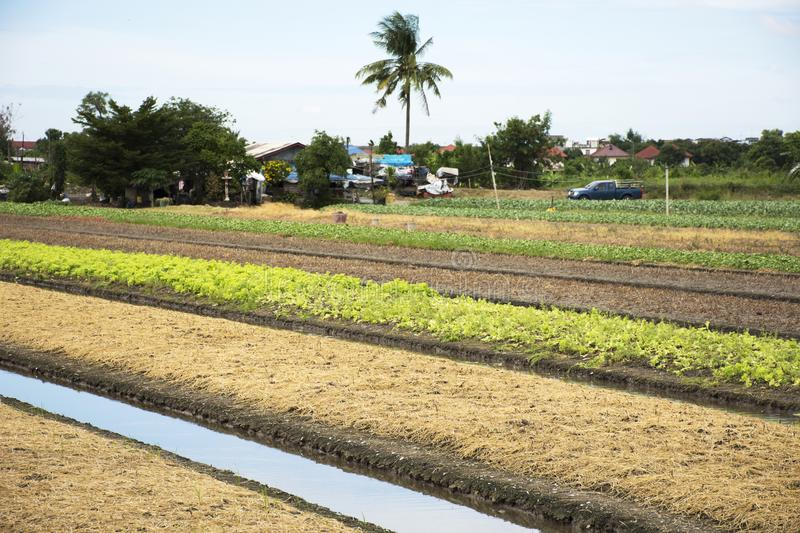 Thai people prepare land for plantation plant and vegetable. In garden at agricultural countryside farm in Nonthaburi, Thailand stock photos