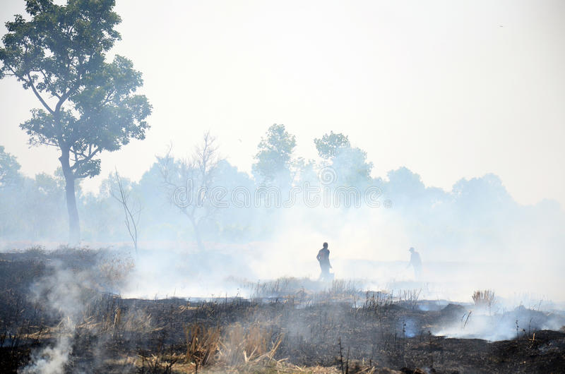 Thai People use branch and leaf extinguish Smoke and flames. Occur from agriculturist Stubble burning rice straw for farming new rice in Surin Thailand royalty free stock photography