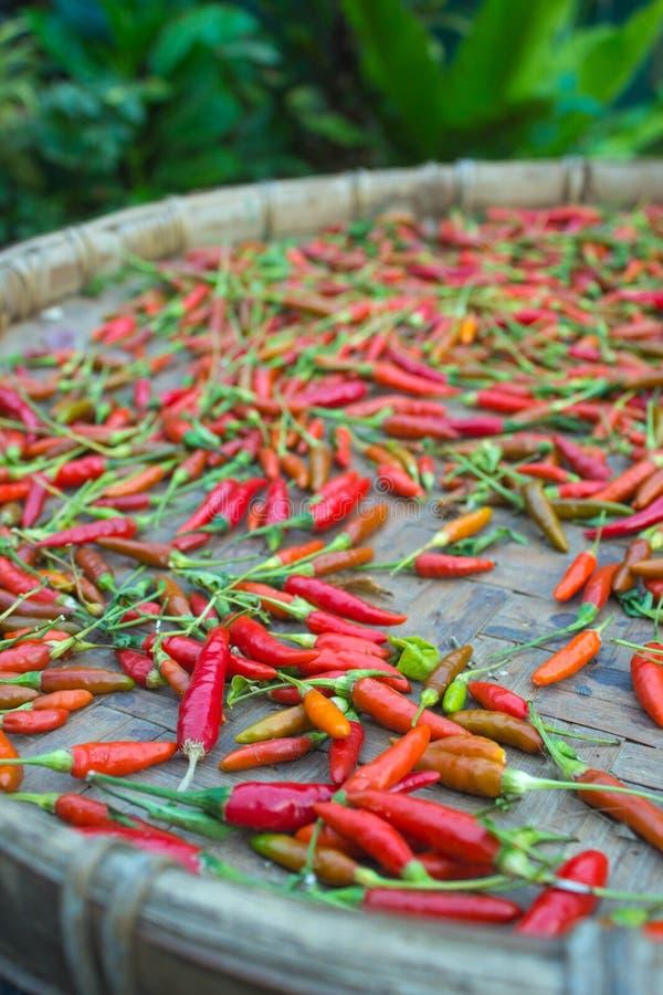 thai peppar arkivbild