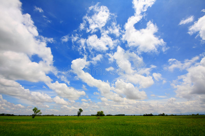 Thai rice field stock images