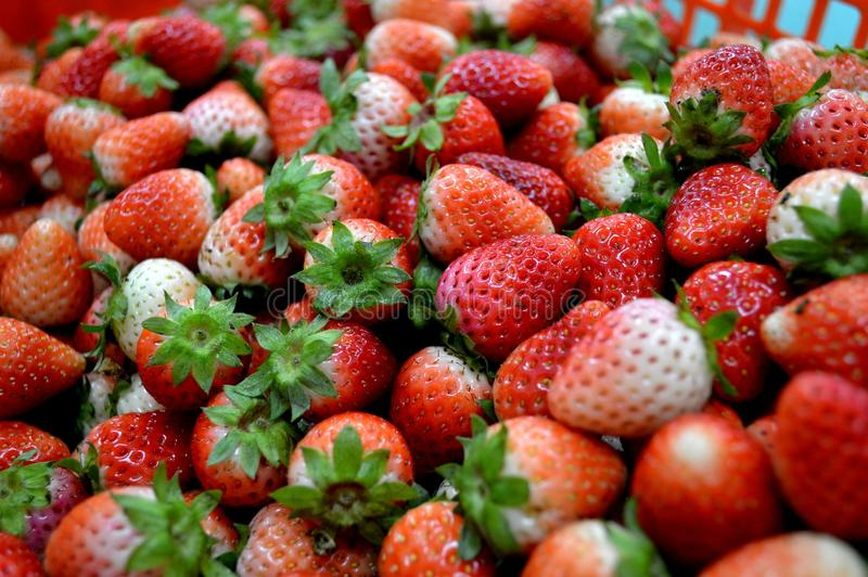 Thai strawberry Fruit of Doi Inthanon. Thai, strawberry, love, fruit, colors, sweet, Fruit of Doi Inthanon, food, wallpaper, teen, farm royalty free stock image