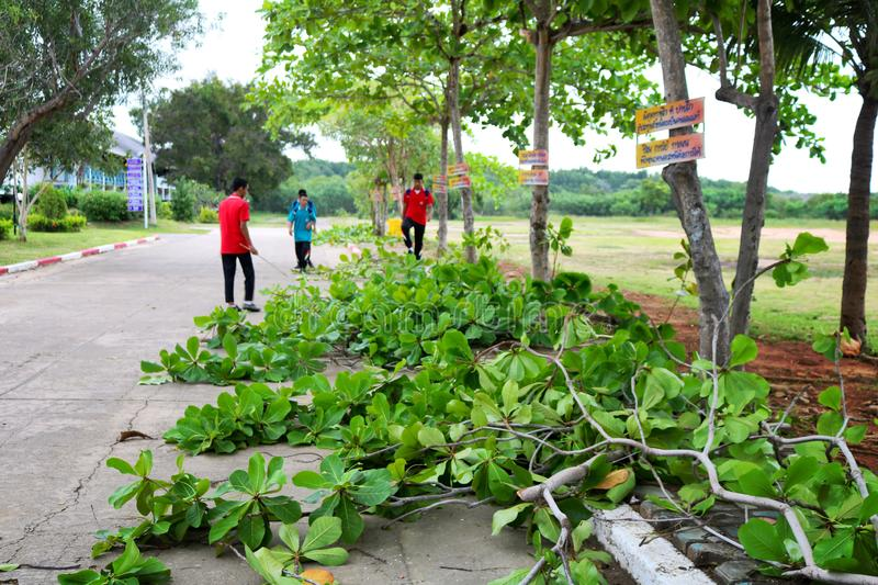 Thai students help cutting down trees to clean the school in Hua Hin, Thailand December 3, 2018 stock photo