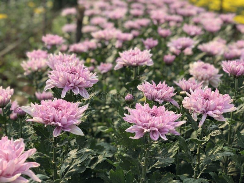 Thailändische Blume im thailändischen Garten lizenzfreies stockbild