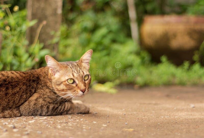 Thailändische Cat Pattern stockbild