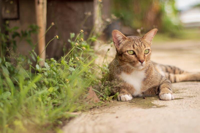 Thailändische Cat Pattern lizenzfreies stockbild