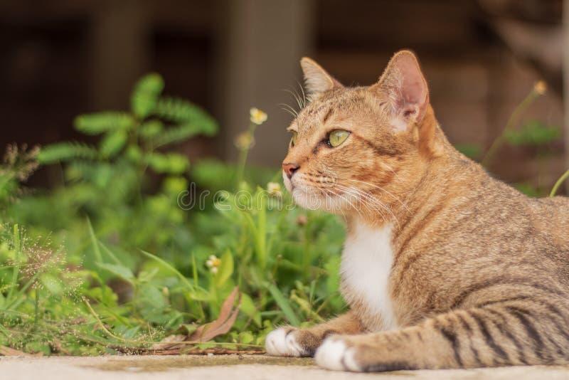 Thailändische Cat Pattern lizenzfreie stockfotografie