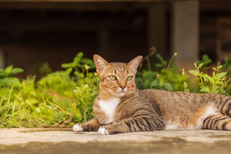 Thailändische Cat Pattern lizenzfreie stockfotos