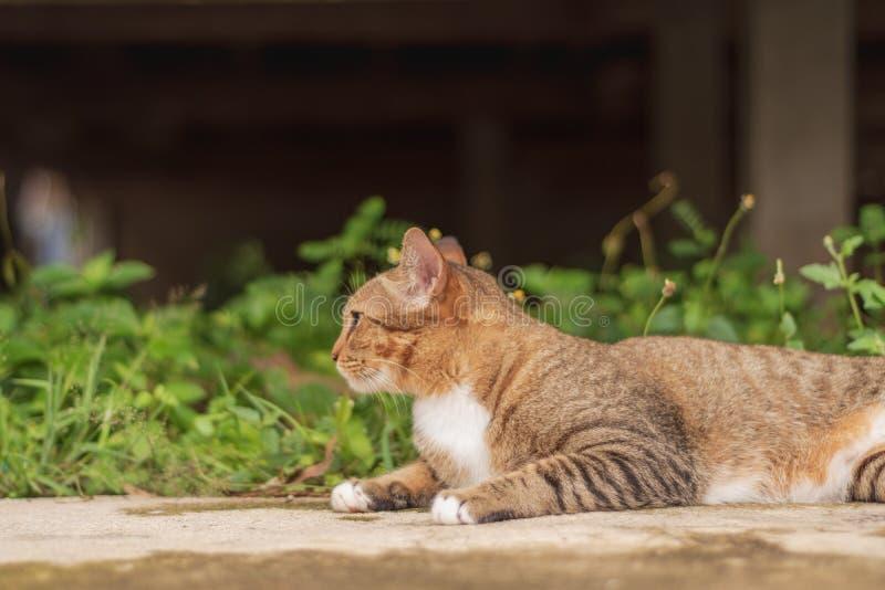 Thailändische Cat Pattern lizenzfreie stockbilder