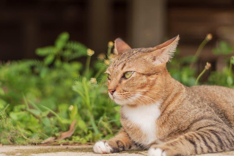 Thailändische Cat Pattern stockfoto