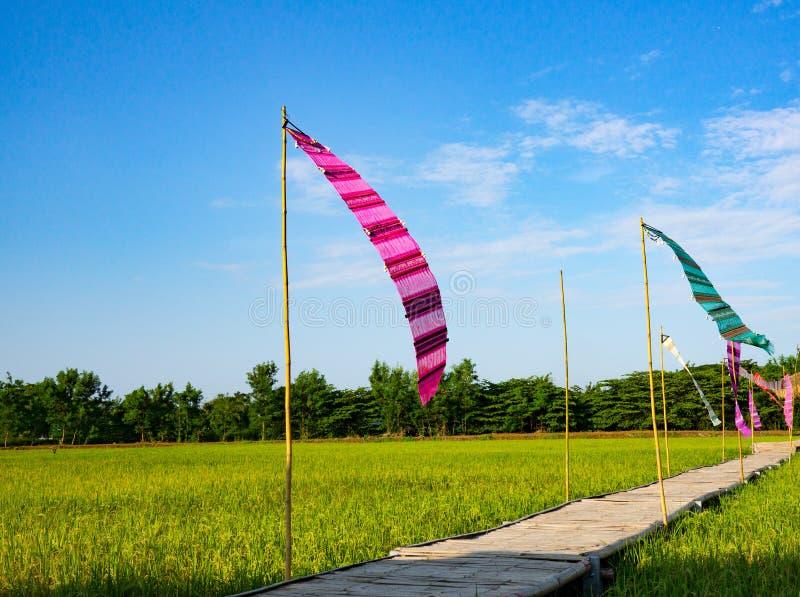 Thailändische Flagge traditionell auf den Reisgebieten lizenzfreie stockfotos