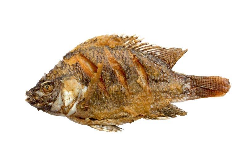 Thailändische gebratene Fische brieten lokalisierten weißen Hintergrund lizenzfreies stockbild