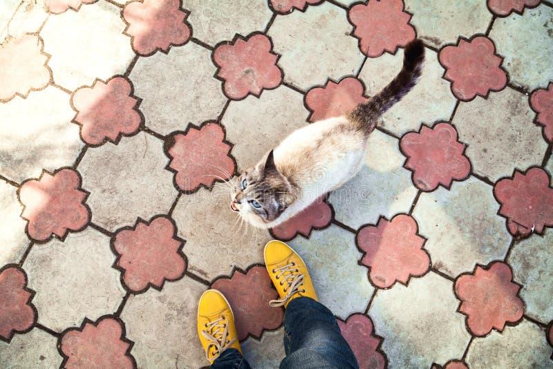 Thailändische Katzen- und Mädchenfüße in der gelben Draufsicht der Schuhe lizenzfreie stockfotos