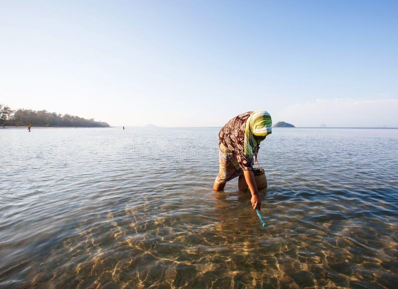 Thailändische moslemische Frauen mit Rohr auf der Suche nach einer HartSHELL-Muschel in der Küstenlinie von Trang-Provinz, Thaila lizenzfreie stockfotos