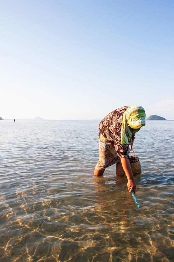 Thailändische moslemische Frauen mit Rohr auf der Suche nach einer HartSHELL-Muschel in der Küstenlinie von Trang-Provinz, Thaila stockfotos