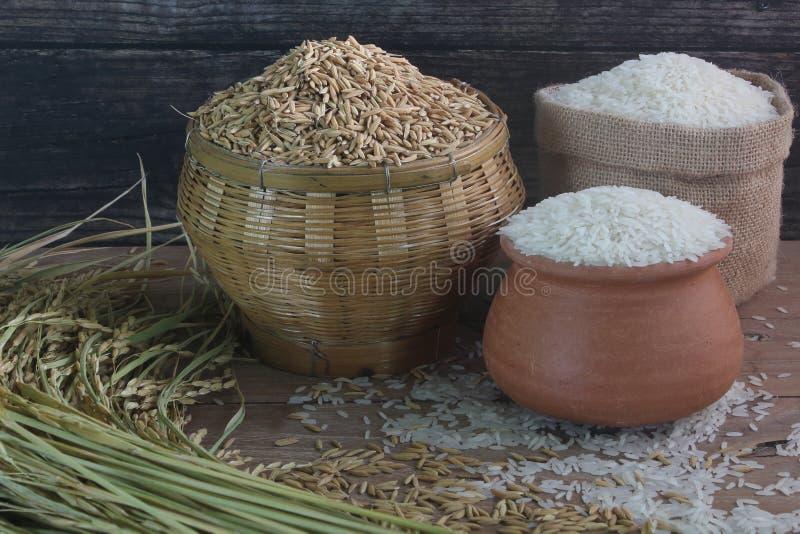 Thailändischer Jasminreis und -paddy auf dem Holztisch lizenzfreies stockbild