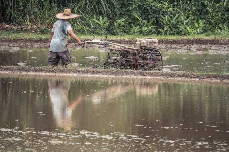 Thailändischer Landwirt, der Pflügertraktor zum Pflugreisfeld vor Reiskultur, Chiang Mai, Thailand fährt lizenzfreie stockfotos