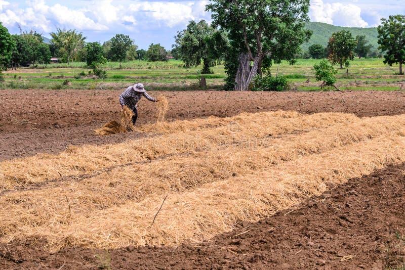 Thailändischer Landwirt, der Plantage mit Stroh mit Laub bedeckt stockfoto