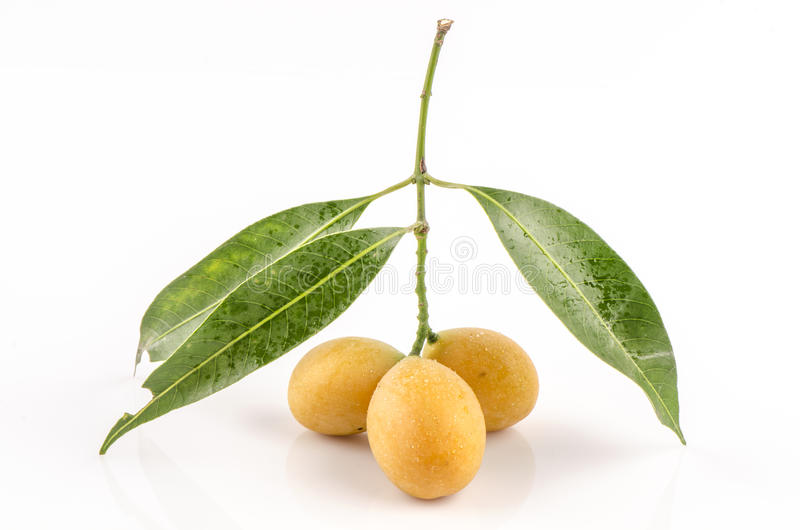 Thailändischer Name Maprang, Marian Plum, Plum Mango (Bouea-macrophylla Griffith). stockfoto
