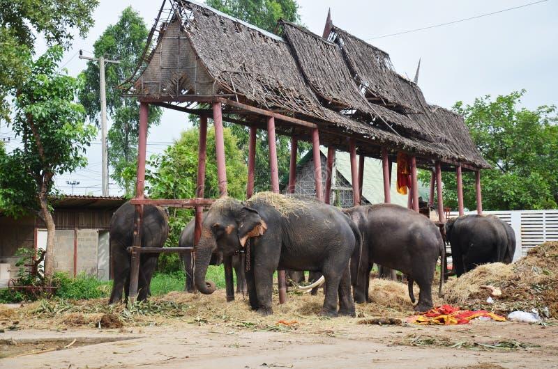Thailändsk elefant på Ayutthaya Thailand arkivbild