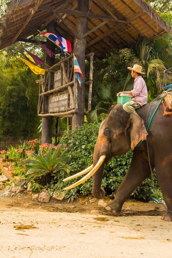 Thailändsk man på elefantcloseupen royaltyfri bild