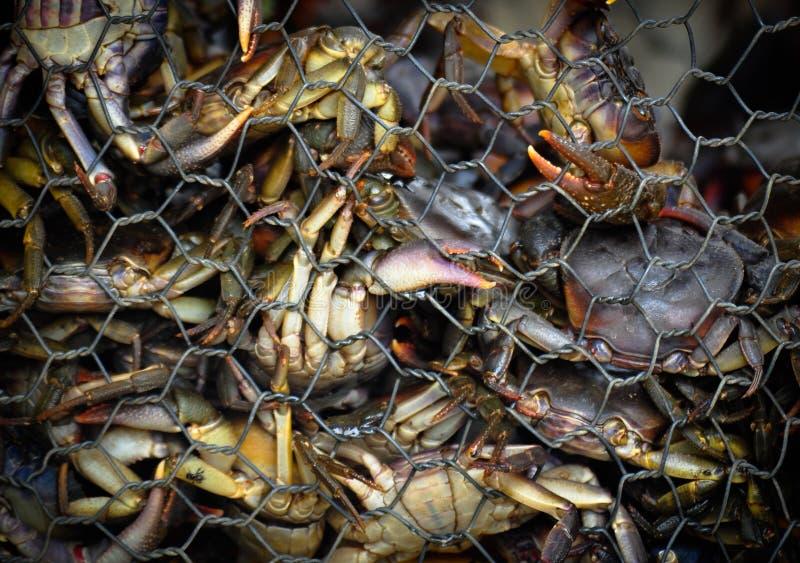 Thailändsk mat för krabba arkivfoton