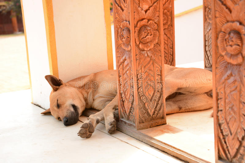 Thailändsk tillfällig hund som sover på golvet arkivfoto