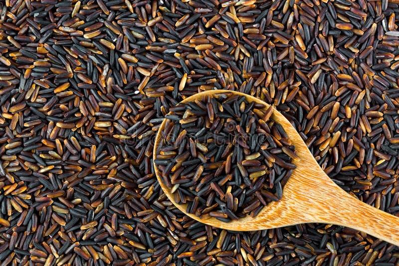 Thailändska organiska svarta doftande ris i träsked arkivfoton