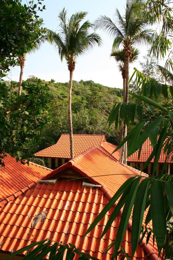 Thailändska tak arkivbilder