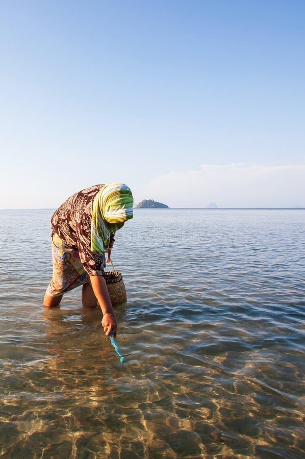 Thail?ndska muslim kvinnor med r?ret i s?kande av enSHELL mussla i kustlinjen av det Trang landskapet, Thailand Slight blur i l?p arkivbilder