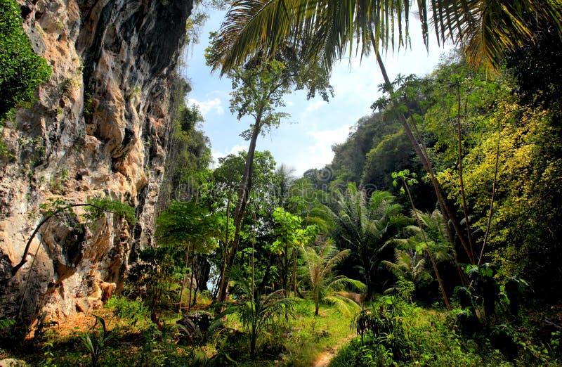 Thailand, bos, kalksteenklippen royalty-vrije stock afbeelding
