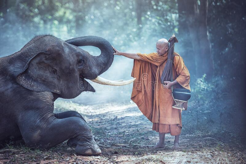 Thailand Buddhist monks with elephant is traditional of religion BuddhismThailand Buddhist monks with elephant is traditional of r. Thailand Buddhist monks with royalty free stock photos