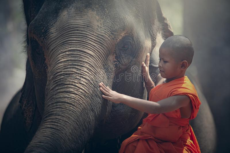 Thailand Buddhist novice monks with elephant is sit and comfort Closely the elephant.  stock photos