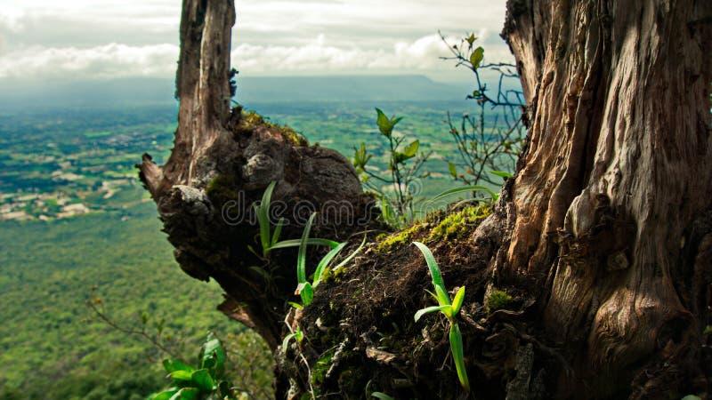 Thailand-chaiyaphum stockfotos