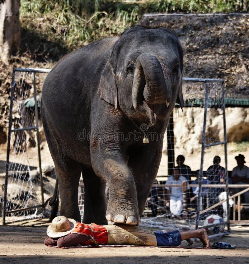 Thailand, Chiang Mai, Asian Elephant Editorial Stock Photo