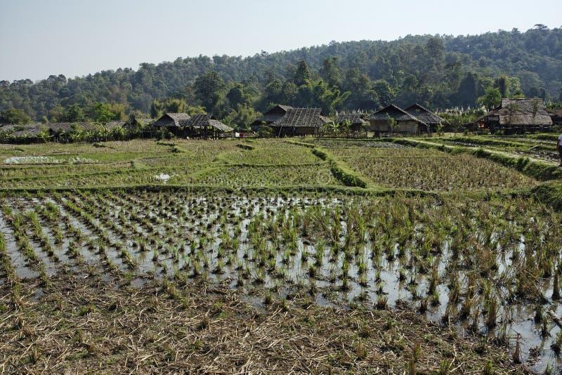 Thailand, Chiang Mai, Karen-langes Stutzendorf lizenzfreie stockfotografie