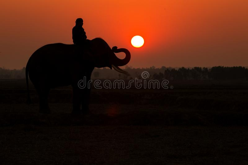 Thailand-Elefantschattenbildsonnenaufgang stockbilder