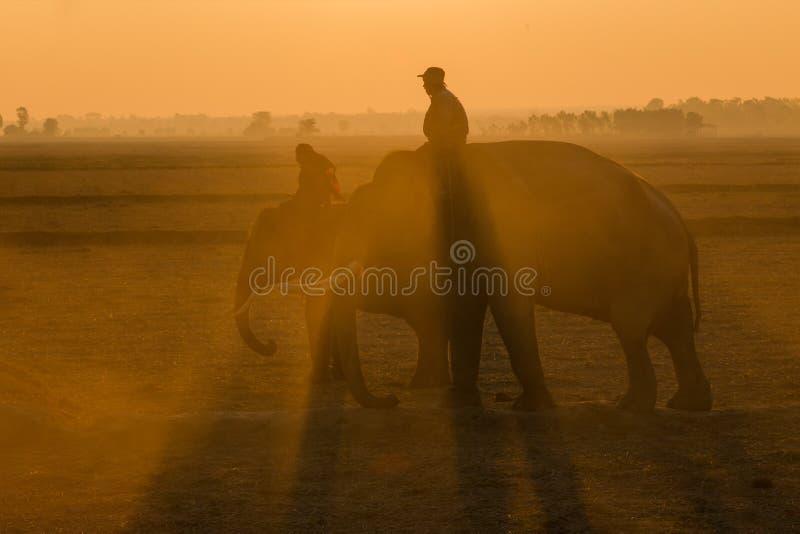 Thailand-Elefantschattenbildsonnenaufgang auf Feld lizenzfreies stockfoto