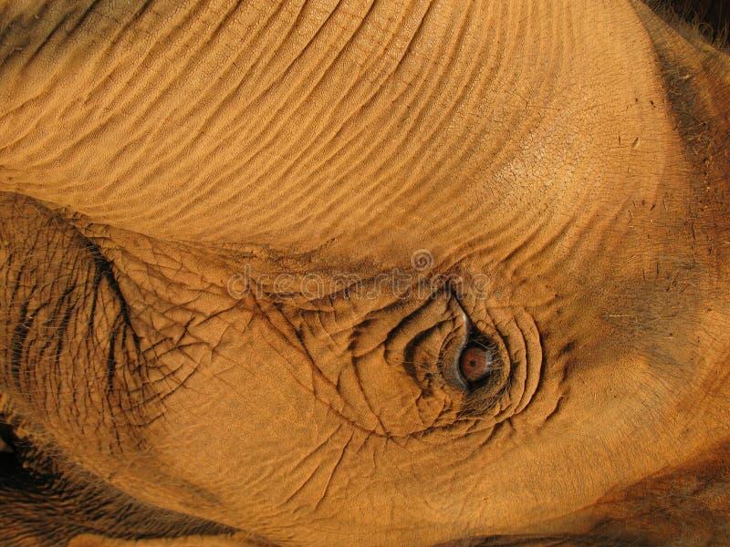 Thailand Elephant Mahout royalty free stock photography