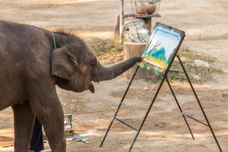 Thailand elephant painting show. Baby elephant show hiss skill by try to painting a view of mountain and tree royalty free stock photo