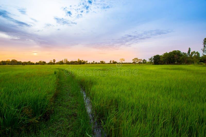 Thailand himmel, jordbruks- fält, landskap - landskap, natur royaltyfria bilder