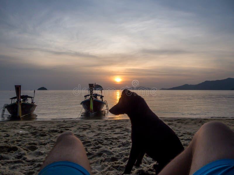 Thailand - Hund auf dem Strand lizenzfreie stockbilder