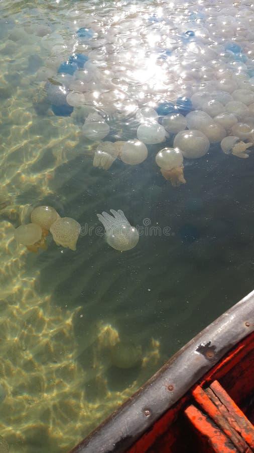 THAILAND Jellyfish fish #15 stock image