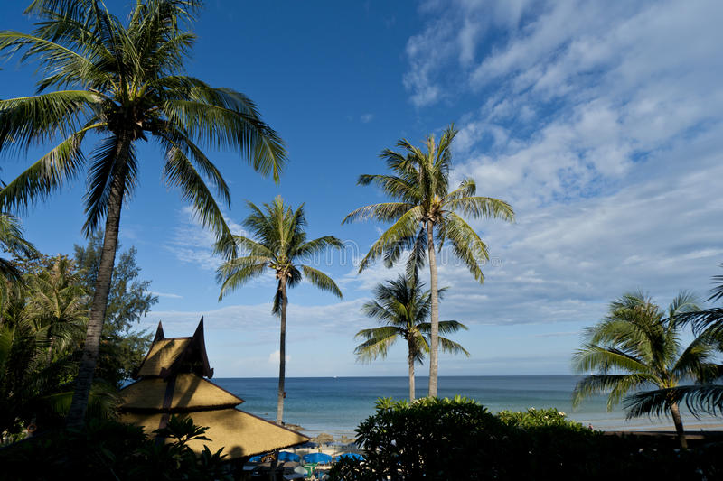 Thailand Karon Beach View. Karon Beach Palm Trees thailand royalty free stock photo