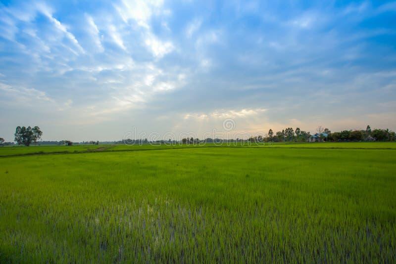 Thailand Nan Province, jordbruks- fält, Asien, lantgård arkivbild