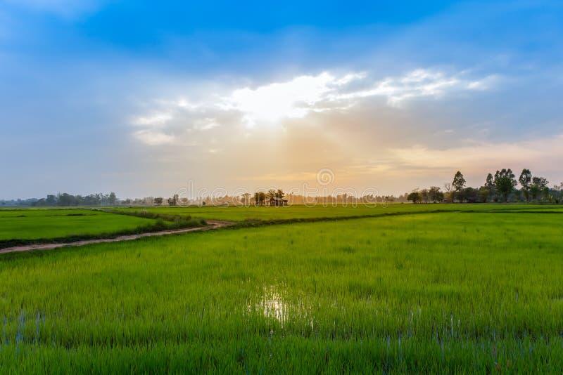 Thailand Nan Province, jordbruks- f?lt, Asien, lantg?rd royaltyfria foton