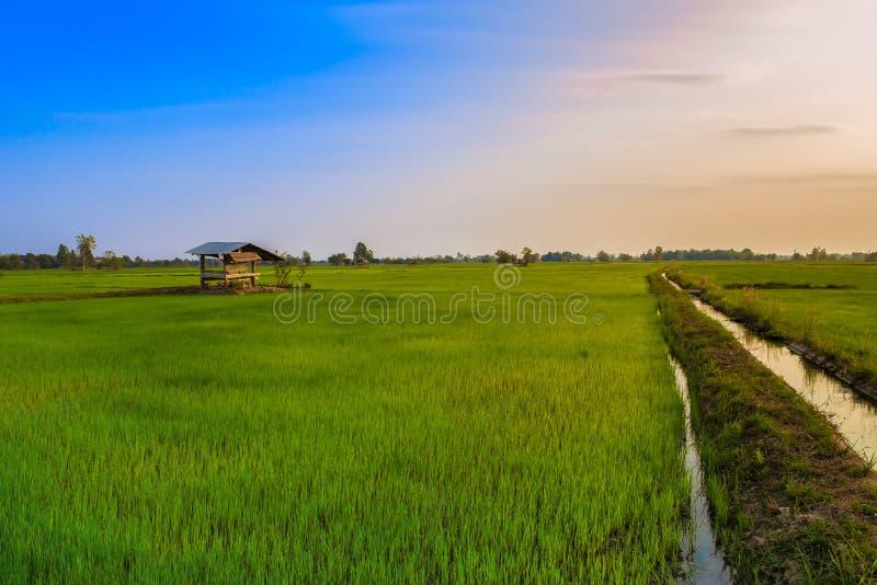 Thailand Nan Province, jordbruks- f?lt, Asien, lantg?rd arkivbilder