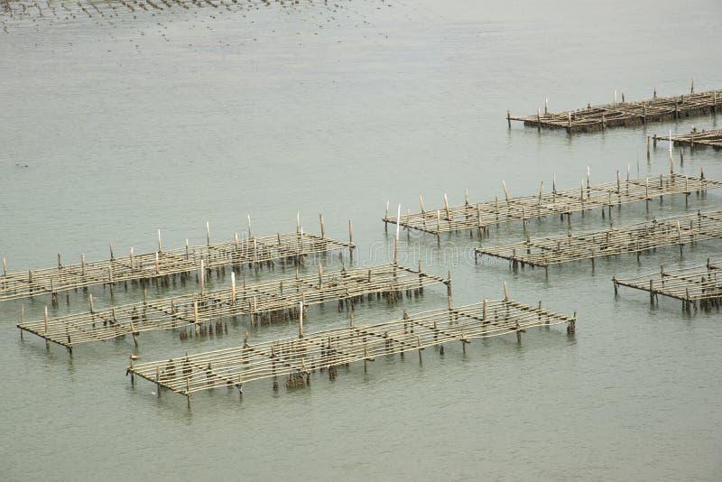 Thailand på en ostronlantgård royaltyfria bilder