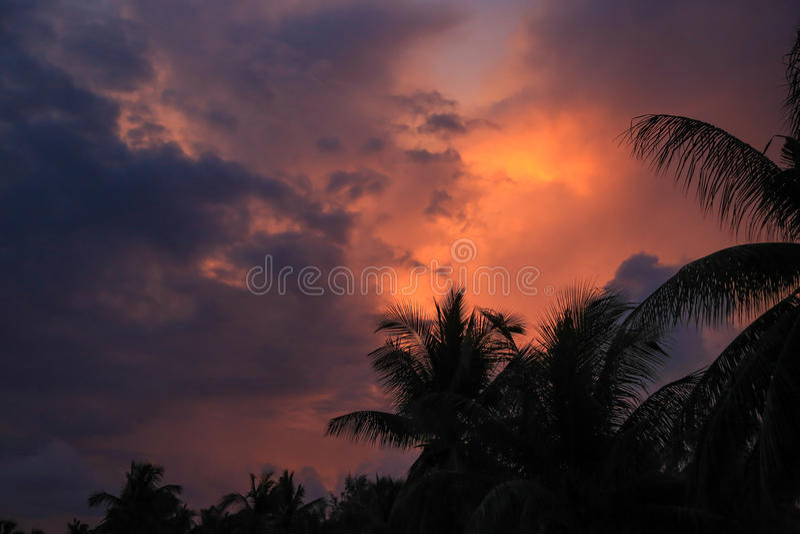 Thailand, Samui, mening, aard, landschap, zonsondergang, hemel, palm royalty-vrije stock foto's